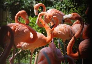 2015-zoo-flamingo-1