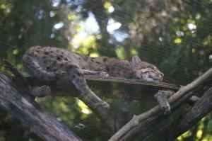 2015-zoo-snoozing-fishcat