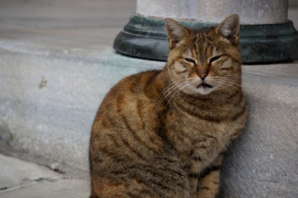A cat sits near the Beautiful Gate outside Aya Sofia in Istanbul, Turkey, 11/7/15