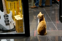 The owner's pet sits inside the doorway of a guitar store in Istiklal Caddesi