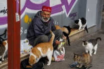 A Turkish man feeds cats daily